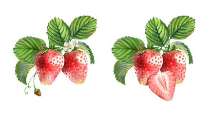 Watercolor illustrations with different berries isolated on the white background: strawberries, flowers and leaves