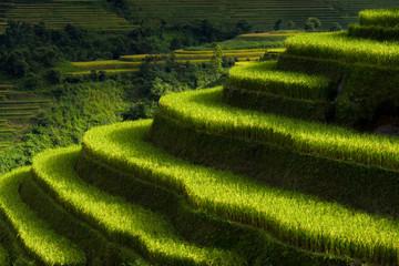 Autocollant pour porte Les champs de riz Rice fields on terraced of Mu Cang Chai, YenBai, Vietnam, Vietnam landscapes