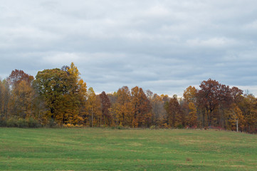 Rural landscape photo of a green, grassy field lined with trees bearing Autumn colors