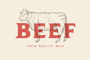 Vintage emblem with picture of cow and inscription Beef, fresh meat. Engraving label. Vector template for meat business.