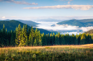 Great summer morning in the Carpathian mountains