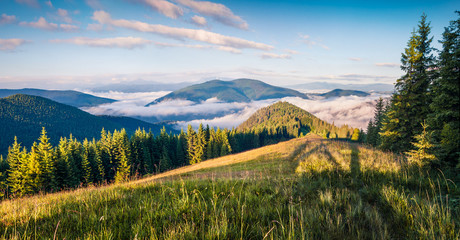 Bright summer morning in the Carpathian mountains.