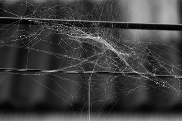 Close up, Black and white shot of spider web on the wire.