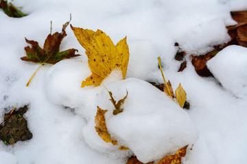 Schnee - Laub im Schnee