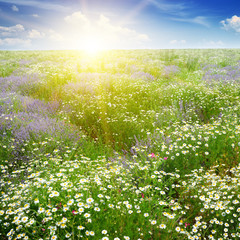 Fototapete - Dawn over scenic summer field
