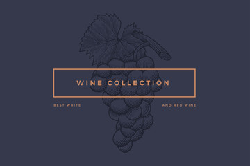 "Logo template for design of wine card, booklet, menu for restaurant or bar with inscription ""Wine collection: Best red and white wines"". Bunch of grapes on dark blue background. Vector illustration."