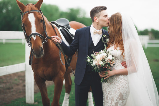 Bride and groom in forest with horses. Wedding couple. Beautiful portrait in nature
