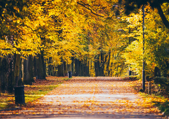 Colorful foliage in autumn park
