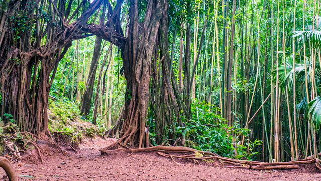 The Arch of Manoa