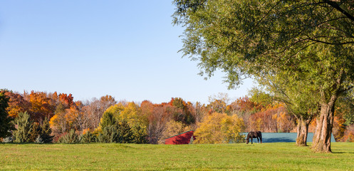 Panorama of an Idyllic Pasture with Grazing Horse and Copy Space Wall mural