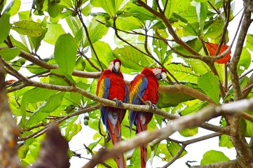 Macaw on a branch