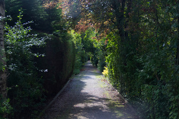 tree covered path 04