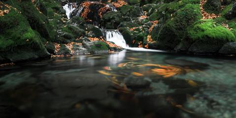 Farben des Herbstes V