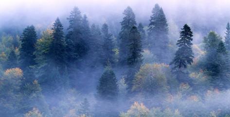Fir-tree forest mist