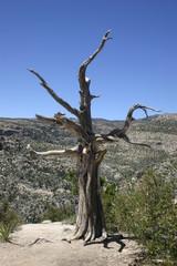 Arizona Desert 60