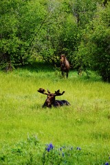 Moose and Mate