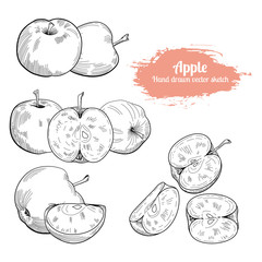 Hand drawn sketch apple fruit.Vector food illustration