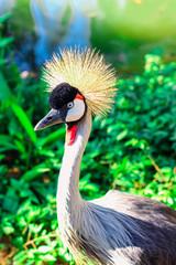 pássaro com coroa