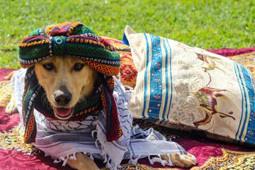 cachorro fantasiado de árabe