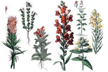 Illustrations of plants.