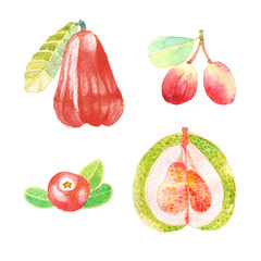 Hand dawn set with watercolor fruits, fresh food, rose apple, cranberry, pummelo