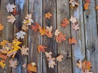 Autumn Leaves Fall On A Path