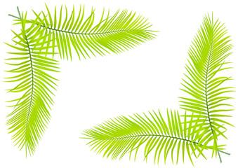 feuilles de palmier en fond de page blanche