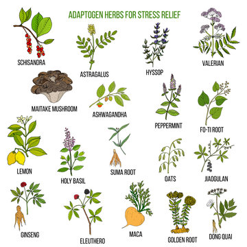 Best adaptogen herbs for stress relief