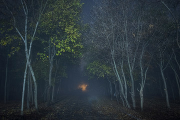 forest, a grove with bushes at night with a light fog