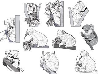 ten black sketches of koala on white background