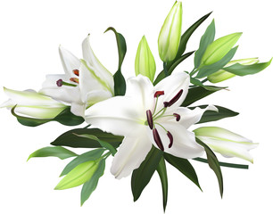 light lily flowers bunch on white background