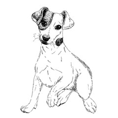 Portrait of Jack russel terrier dog. Vector engraved art. Friendly smilling puppy isolated on white background. Pet shelter, flyer, poster, clothing prints. Sketched poster