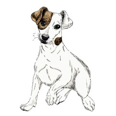 Portrait of Jack russel terrier dog. Vector colored engraved art. Friendly smilling puppy isolated on white background. Pet shelter, flyer, poster, clothing prints. Sketched poster