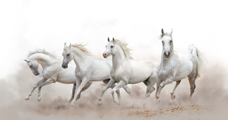 Spoed Foto op Canvas Paarden beautiful white arabian horses running over a white background