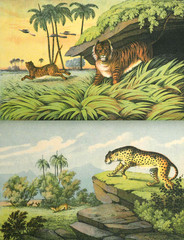 The world of animals in the wild.