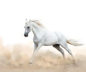 white arabian stallion running in the dust