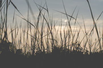 Grass with the sun Sky background