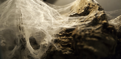 Spiderweb on halloween