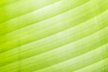 Macro detail of green leaf texture. Close up beautiful leaves pattern.