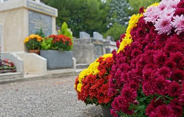 Fleurs Chrysanthème pomponettes