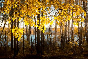 Autumn forest lake. Beautiful nature background