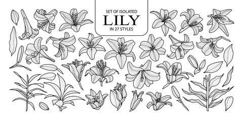 Set of isolated lily in 27 styles. Cute hand drawn flower vector illustration in black outline and white plane.