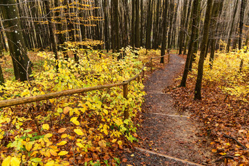 path in the autumn forest, wooden steps in the autumn forest, Pathway through the autumn forest