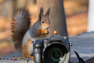 Squirrel photographs on the camera