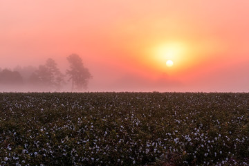 Driving through the midlands of South Carolina during sunrise reveals the magical landscape that appears for only several minutes of the day.