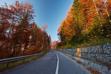 Asphalt road through vibrant forest