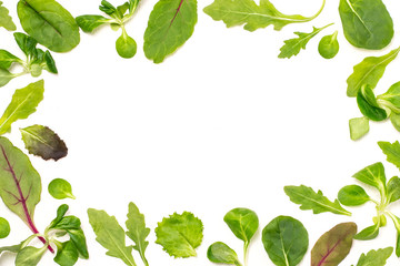 Frame of different salad leaves on white background