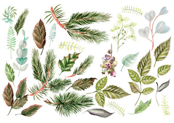 Watercolor set. Wild forest. Leaves. Illustration