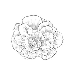 vector drawing flower