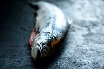 Fresh salmon fish dark black concrete background prepared for filing. Copy space, top view